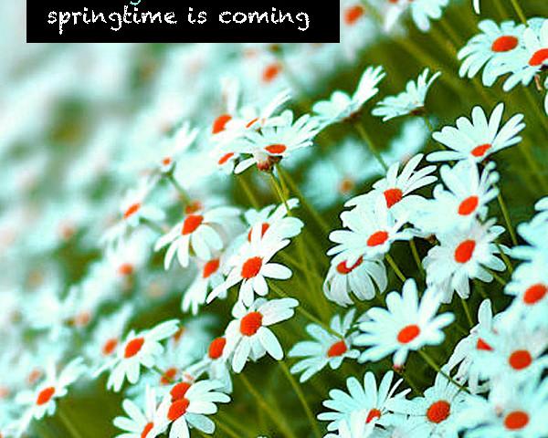 Burningmax Studiomix :: Springtime is Coming